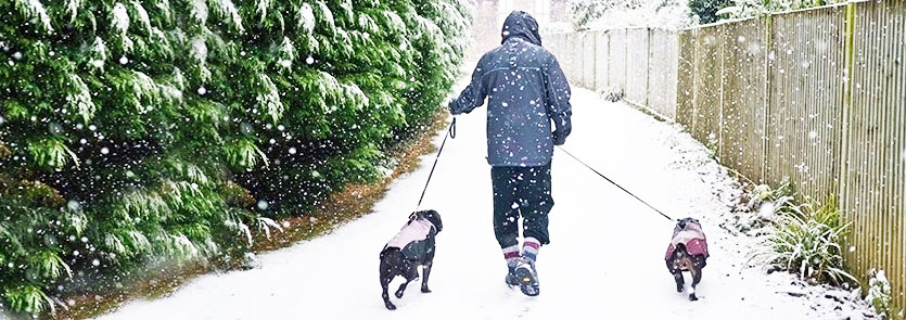 Adult walking two dogs in the snow